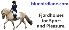 Fjordhorses for sport and pleasure.